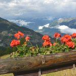 Schweiziska alper – och tillverkning av racletteost