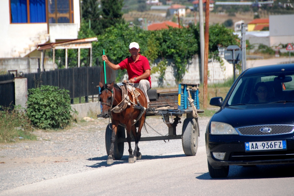 Man vet aldrig vad man möter på vägarna i Albanien