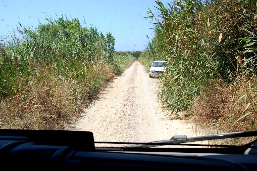 Vägen till stranden - den mötande bilen har kört åt sidan så vi kan komma fram...