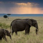 "Safari i Kenya och Tanzania – att uppleva ""The big five"""