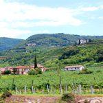 Valpolicella – med besök hos vinproducenter
