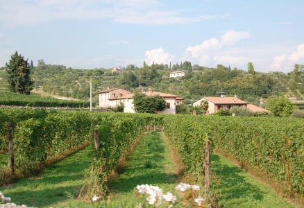 Vingårdar i Valpolicella