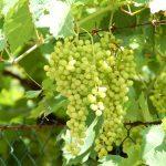 Vinprovning i Valpolicella