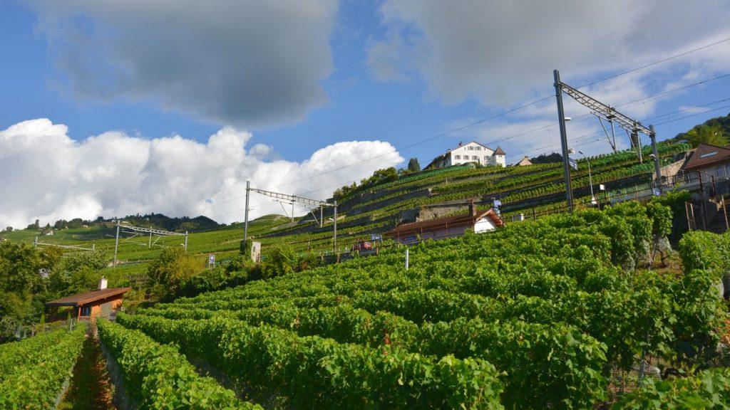Vinodlingar i Lavaux i Schweiz
