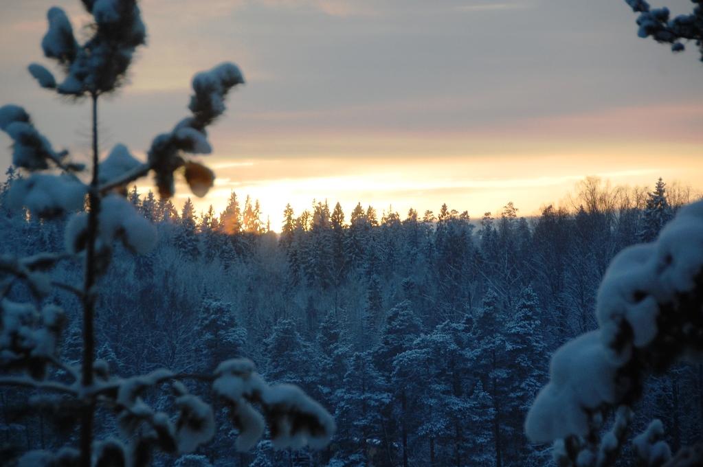 När vi tittade ut genom fönstren såg vi hur solen sjönk över träden