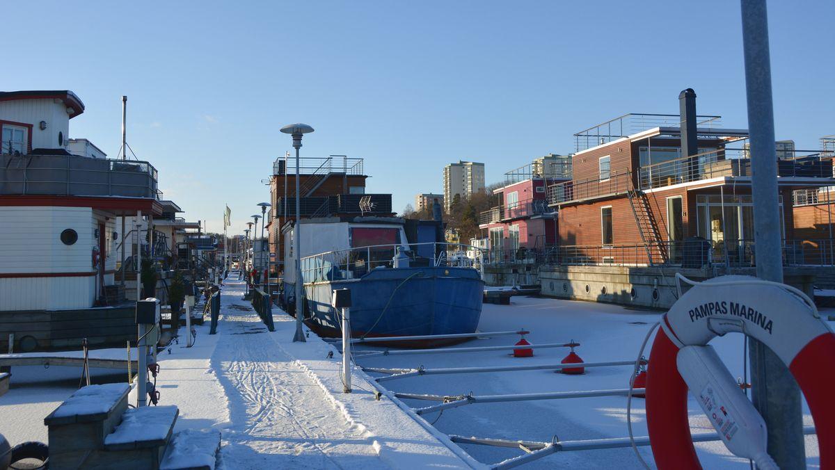 Vinter Pampas marina