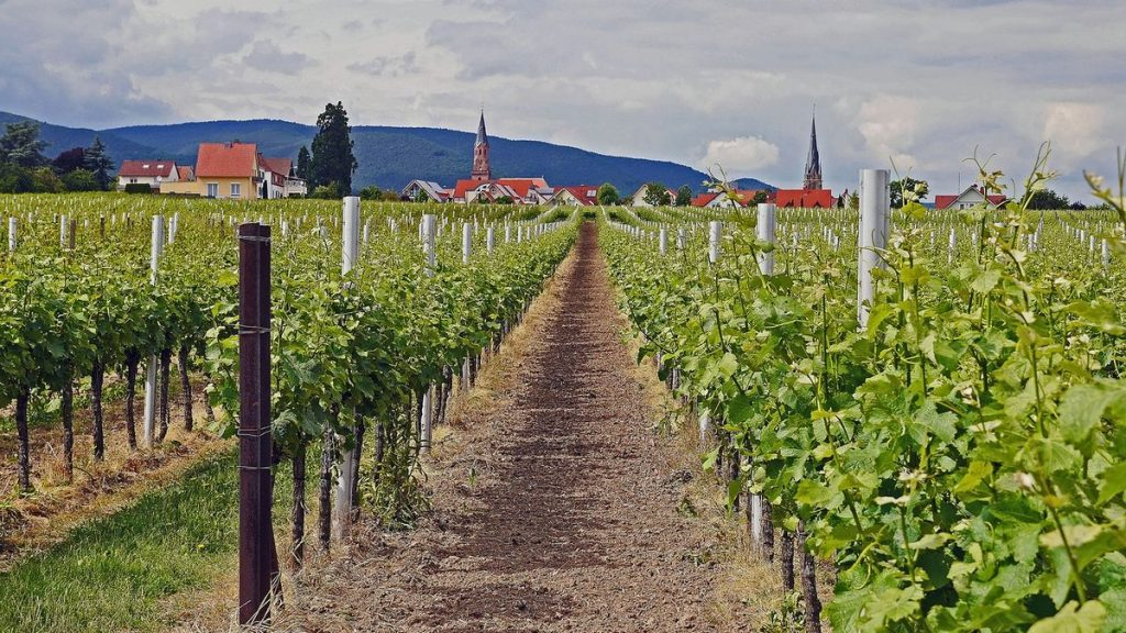 Vinodlingar och vackra vägar i Tyskland