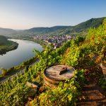 Vinfester i Tyskland – upplev höstens vinfestivaler