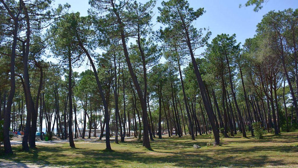 natur på Zaton holiday resort