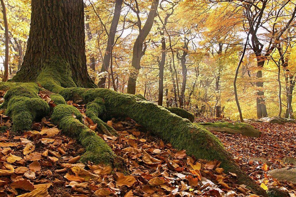 Unesco världsarv i Kroatien - bokskogar i 12 europeiska länder