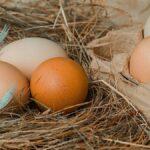 25 Fakta om ägg – näring, traditioner och smarta knep