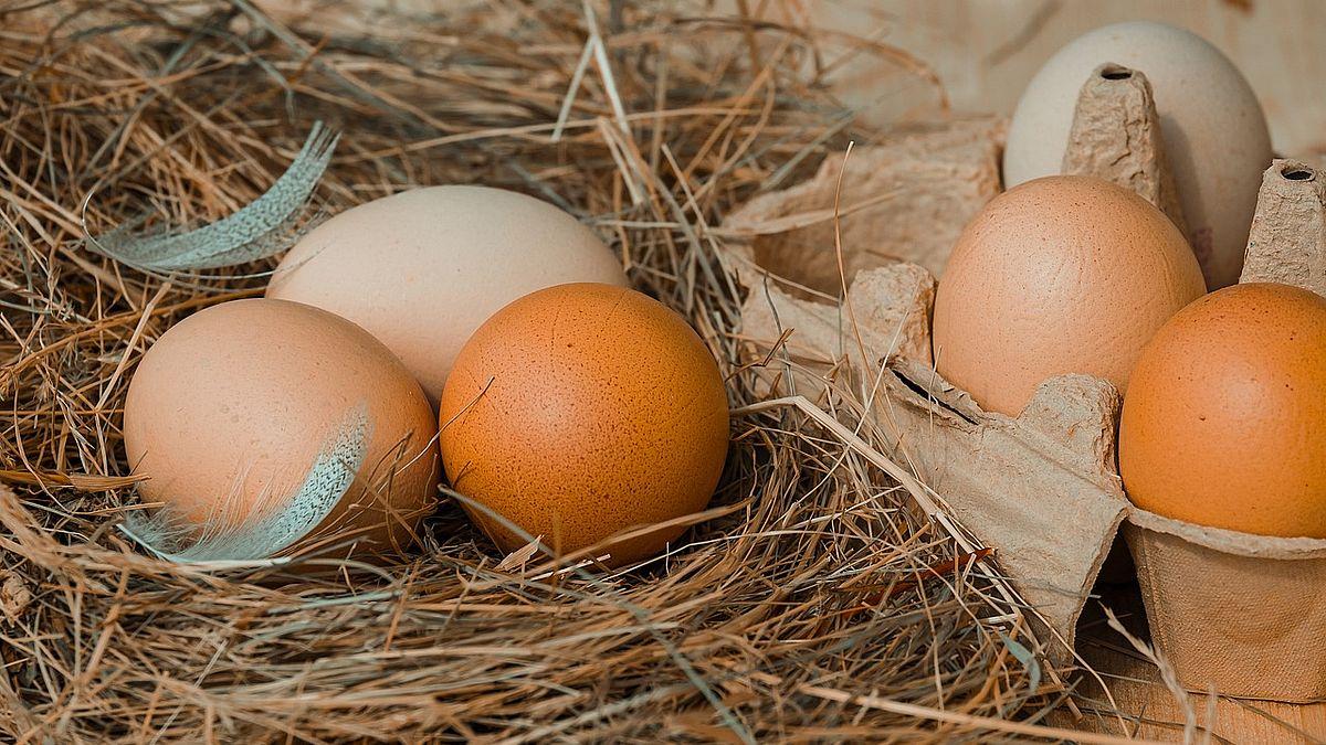 Fakta om ägg