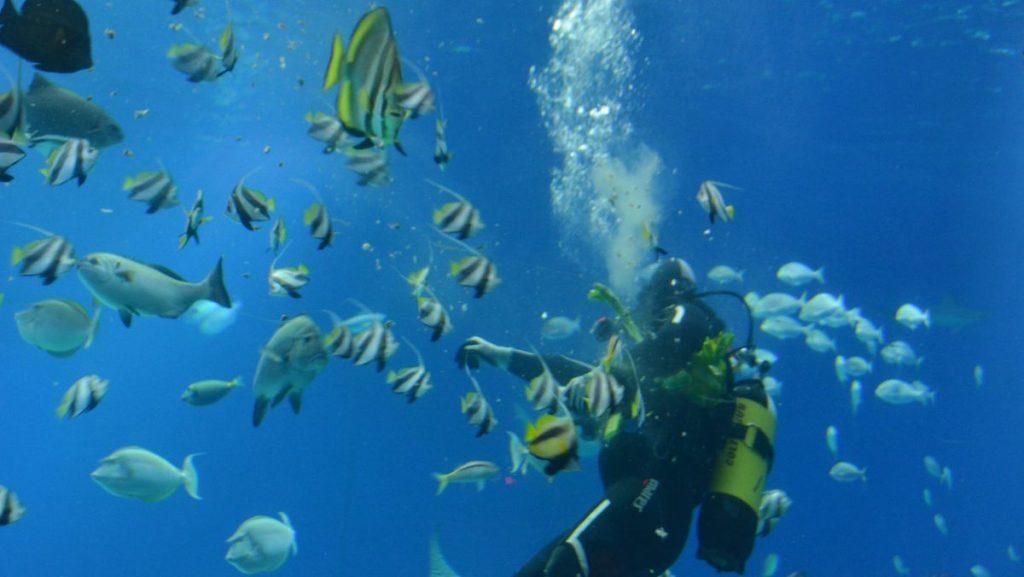 dykning Israel