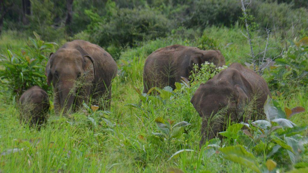 Vågar man resa till Sri Lanka och se elefanter?