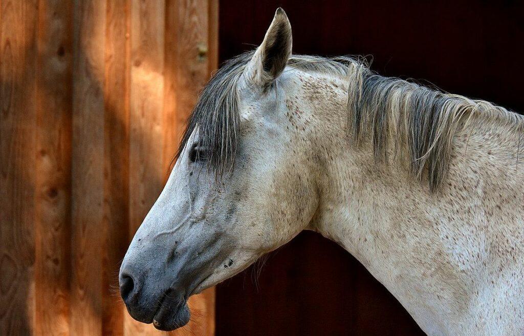 Legernderna om Staffan Stalledräng och hans hästar