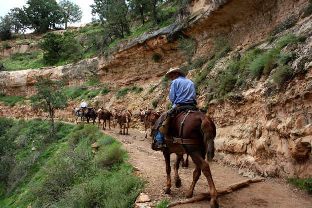 På vägen ner i Grand Canyon i USA